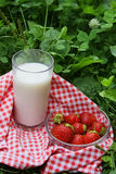 Glass of milk and strawberry on a grass. In summer day Stock Images