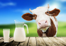 Glass of milk. And sunny day Stock Image