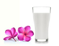Glass of milk and Tropical flowers frangipani Stock Image