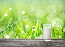 Glass of milk on wooden table on background of grass with mornin Stock Photos