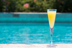 Glass of Mimosa Royalty Free Stock Photos