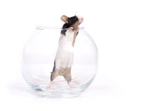 Glass of... mouse Royalty Free Stock Photography