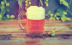 Glass mug of cold fresh golden beer on wooden table. And branches of ripe hops on dark wall stock photos