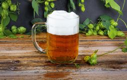 Glass mug of cold fresh golden beer on wooden table. And branches of ripe hops on dark wall stock photography