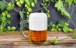 Glass mug of cold fresh golden beer on wooden table. And branches of ripe hops on dark wall stock image