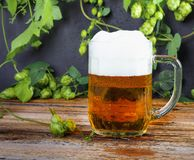 Glass mug of cold fresh golden beer on wooden table. And branches of ripe hops on dark wall royalty free stock photography