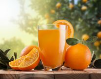 Glass of orange juice and fruits Stock Photography