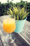 Glass of orange juice and green plant Royalty Free Stock Image