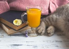 A glass of orange juice, old books and grey cat`s paws. Free copy space.