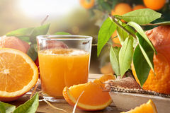 Glass of orange juice on a wooden in field closeup Stock Photos