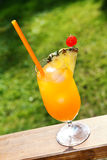 Glass of orange tropical cocktail on grass background Royalty Free Stock Image