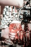 Glass of pale ale getting ready in barkeeper`s hands. Split second before drinking. Barkeeper preparing a glass of pale ale, holding a glass with one hand and royalty free stock photo