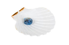 Glass pearl in ocean shell isolated Stock Photography