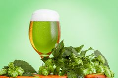 Glass Pint of beer, homemade ingredients for beer on green. Background royalty free stock photos