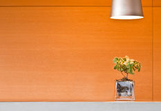 Glass planter under a lamp. Glass planter lit by an overhead lamp set against warm orange wood paneling Stock Photos