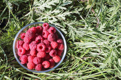 Glass plate with fresh ripe raspberry standing on a grass Royalty Free Stock Images