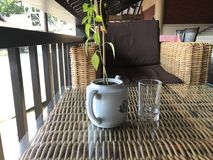 Glass and potted plant on table Stock Images