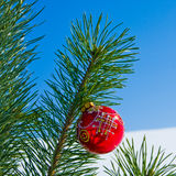 Glass red ball on christmas tree Stock Image