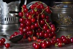 glass red för vinbär Royaltyfri Foto