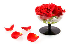 Glass with red roses and red leaves. Isolated on white background royalty free stock photos