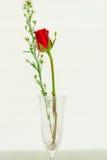 glass red steg Royaltyfria Foton