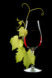 Glass of red wine. And branch of grape leaves isolated on a black background Stock Images