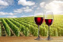 Glass of red wine against vineyard Stock Photography