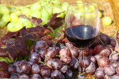 Glass of red wine with  bunch of black and white grapes Stock Image