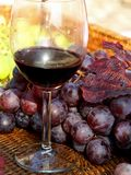Glass of red wine with bunches of ripe grapes into the winery Royalty Free Stock Images