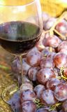 Glass of red wine with bunches of ripe grapes into the winery. Glass of red wine with bunches of ripe grapes in autumn Stock Photos