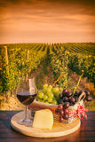 Glass of red wine in front of a vineyard at sunset Royalty Free Stock Photo