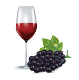 Glass with red wine and grape isolated Stock Images