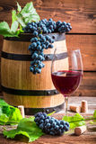 Glass of red wine and grapes Stock Image