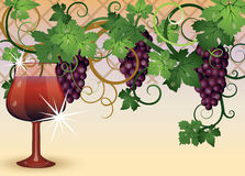 The glass of red wine and grapes Royalty Free Stock Images