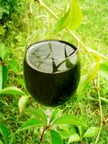 Glass of red wine outdoors - winery and wineyards styled concept. Elegant visuals royalty free stock photos