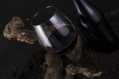 Glass of Red Wine with Vine in a Black Background Royalty Free Stock Images
