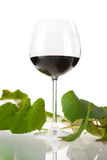 Glass of Red Wine and Vine Leaves Stock Images