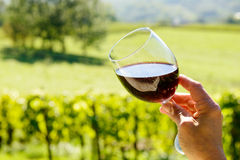 Glass of red wine with a vineyard Royalty Free Stock Photo