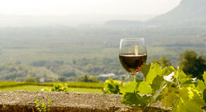 Glass of red wine with a vineyard Royalty Free Stock Images