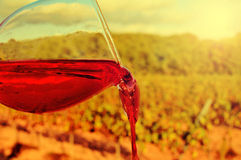 Glass of red wine in a vineyard Stock Image