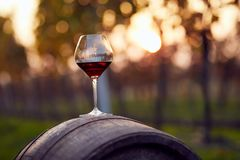 A glass of red wine on a wooden barrel. In an autumn vineyard Royalty Free Stock Images