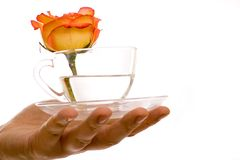 A glass of rose drink in the hand Stock Images