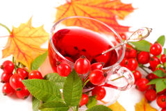 Glass of rose hip tea Royalty Free Stock Photos