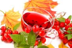 Glass of rose hip tea. Glass of fresh herbal rose hip tea royalty free stock photos