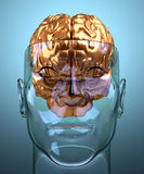 Glass severed human head with brain Stock Photography