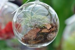 Glass sfärTerrarium Arkivfoto