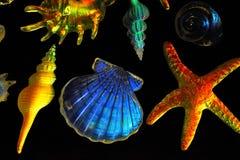 Free Glass Shells Royalty Free Stock Image - 12221696
