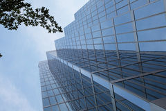 Glass skyscraper with tree Stock Photo