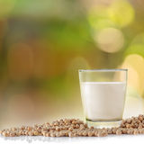 Glass of soy milk and soybean in garden background. Royalty Free Stock Images
