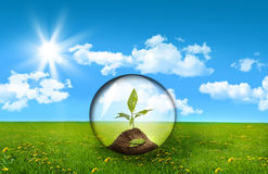 Glass sphere with plant in a field of grass royalty free stock photo